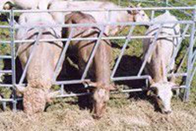 Bild på Utfodringsgrind